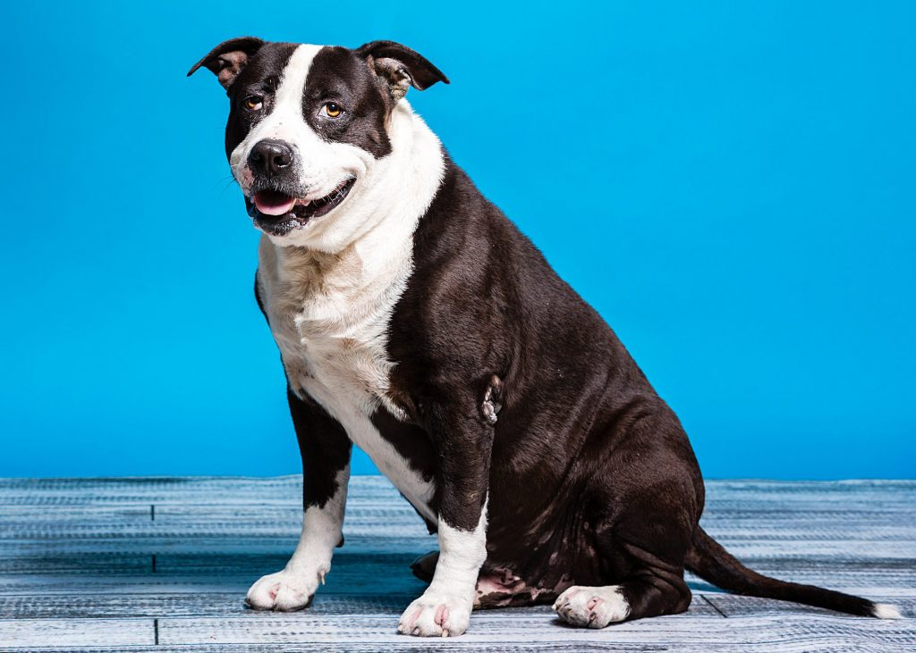 About Us – Nevada Humane Society | With Shelters located in