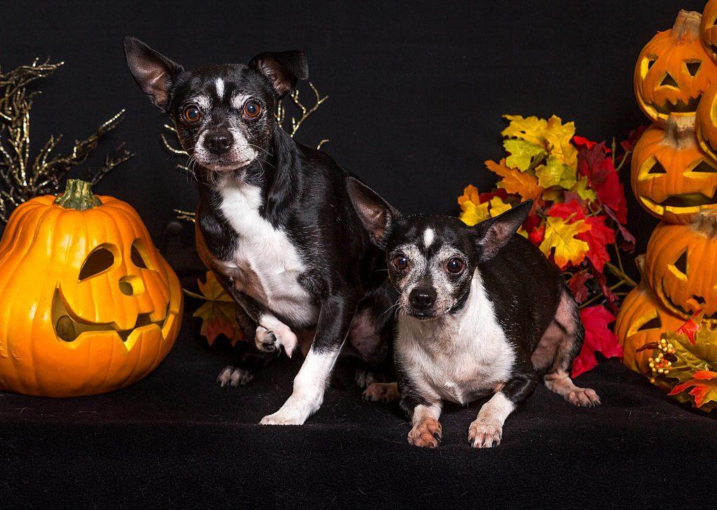 Carson City – Adopt a Pet – Nevada Humane Society | With