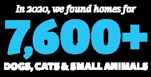 Homed-Animals